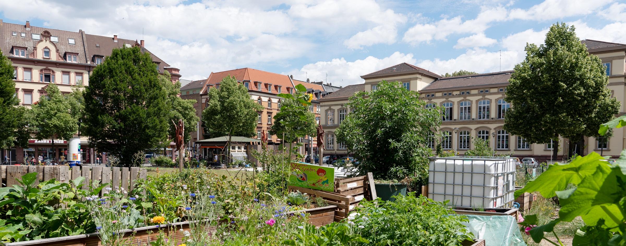 Urban Gardening Projekt auf dem Neumarkt